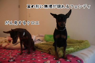 2013_02_18_9999_25.jpg