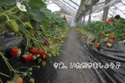 2013_03_03_9999_2.jpg