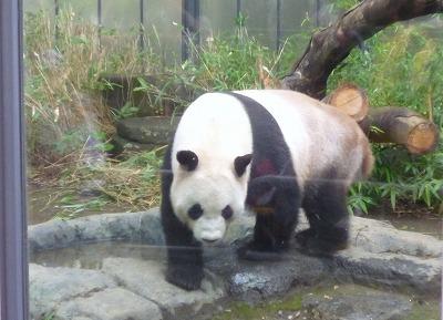 上野のパンダ特集3