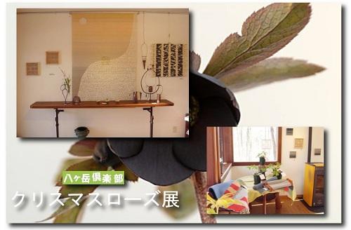 yaturose2.jpg