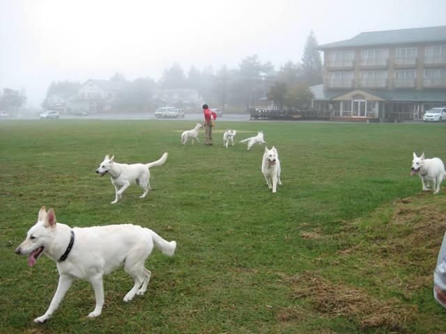 霧が峰 22
