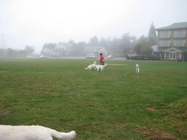 霧が峰 23