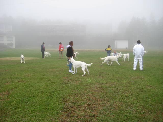 霧が峰 31