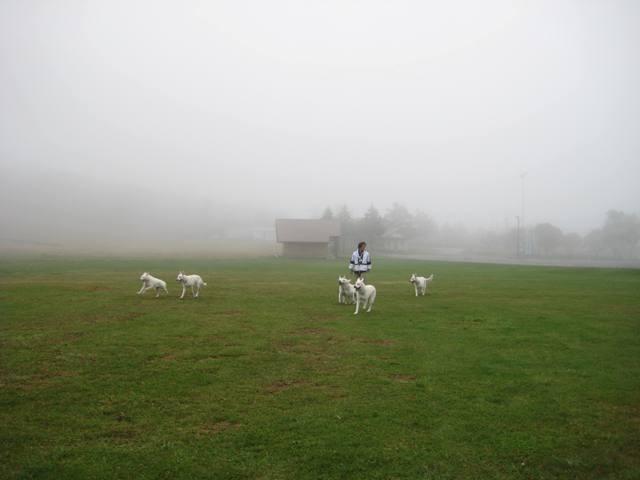 霧が峰 29