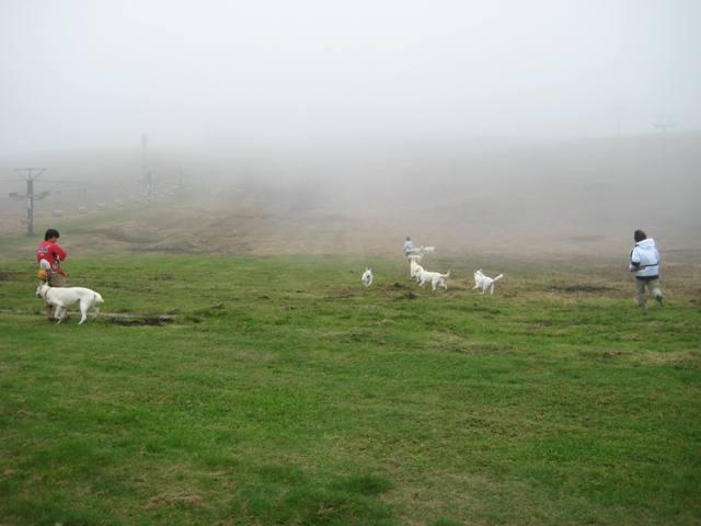 霧が峰 34