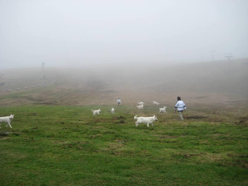 霧が峰 35