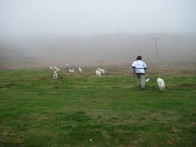 霧が峰 33