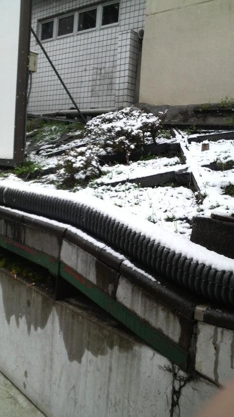 雪ですよww