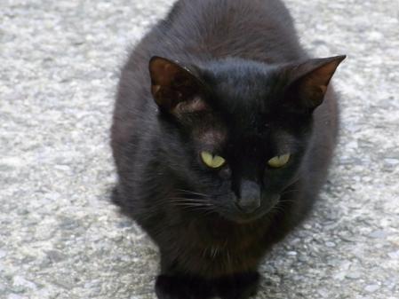 cat019.jpg