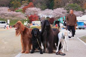 9b21f1423shikizakura_xl-copy.jpg