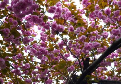 春の土手4