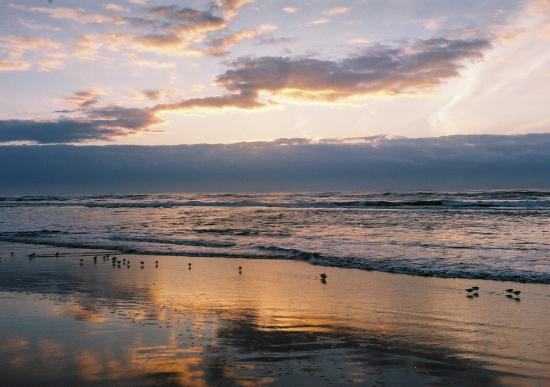 波打ち際 朝日 小鳥