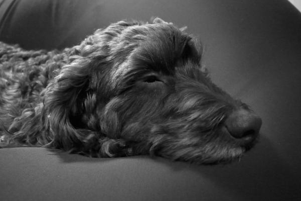 sleep・・・jimi