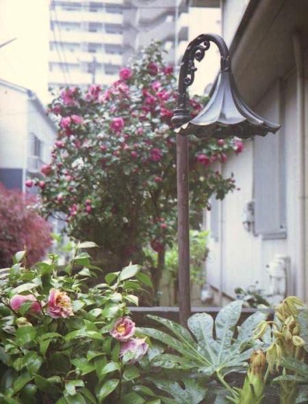 雨降りの日の花