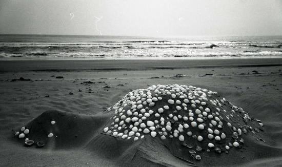 謎の海生物?
