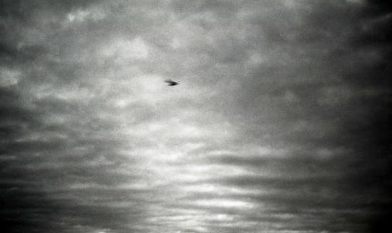 曇り空と鳥