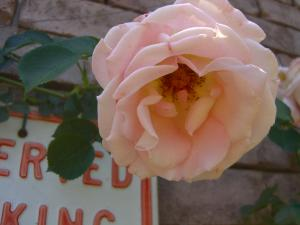 rose6_convert_20110517224413.jpg