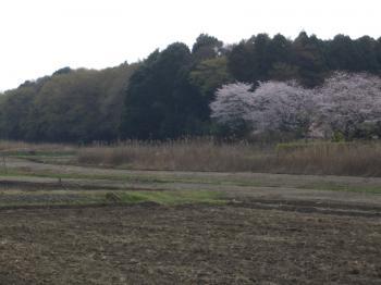 satoyama_convert_20110410210102.jpg