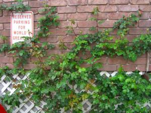 wall2_convert_20110503222035.jpg