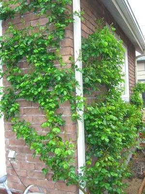 wall_convert_20110503222005.jpg