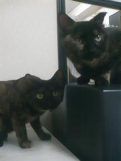 2010愛猫3
