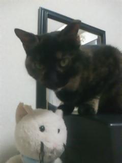 2010愛猫5