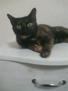 2010愛猫2