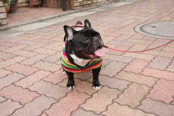 rainbow parka