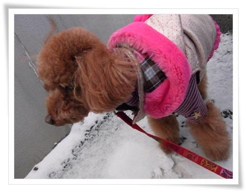 やっぱり雪が好き・1