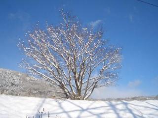 雪晴れ9609