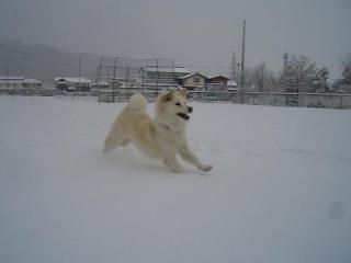 雪中ラン9585