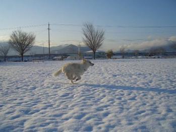 雪上ラン19910