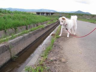 流水の用水路0247