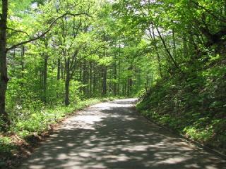 木漏れ日の林道0305