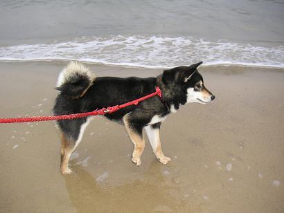砂浜を散歩中