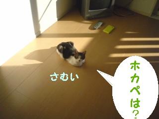 neko100114-3.jpg