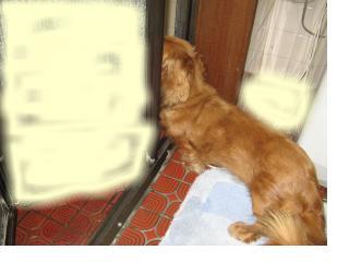 snap_fumi777_201083213352.jpg