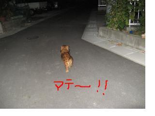 snap_fumi777_20109121911.jpg