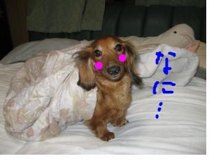 snap_fumi777_201093234813.jpg