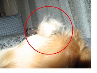 snap_fumi777_201095223537.jpg