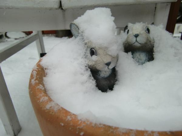 1月16日雪うさぎ