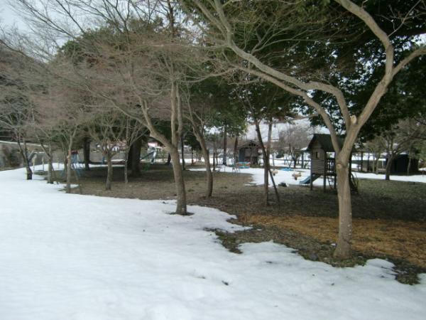 2月11日雪が・・