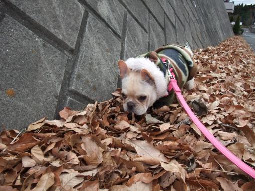 1-4散歩落ち葉