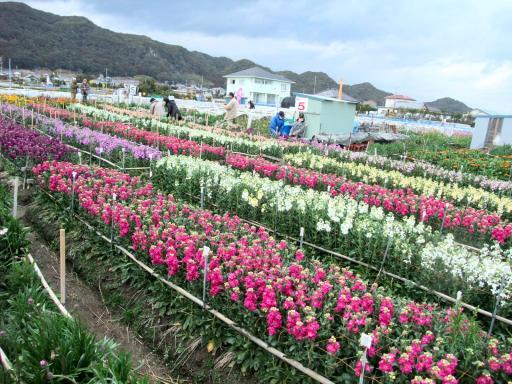 2-12花畑