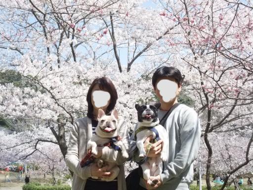 4-13低い桜4