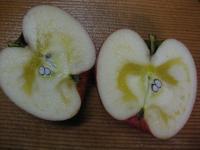 食材 リンゴ(ふじ) 今年の一個目断面 091206_cIMG_6419