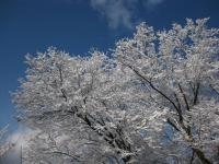 objet_R18生坂トンネル北 雪の花と青空 100202_cIMG_7388