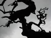 樹 小野のシダレグリ自生地 枯損木の枝振り 100924_cIMG_3218
