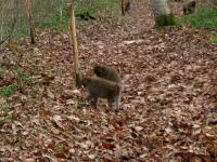 Animal ニホンザル 最後までドングリ探し 森林植物園 101114_cIMG_6533