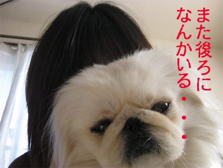 IMG_9507.jpg